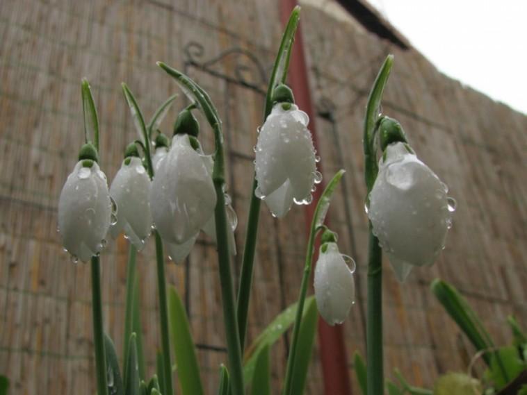 Január 20. Tavaszébresztő Sebestyén