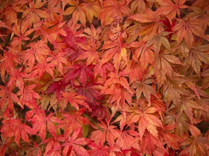 levelek szine osszel 03