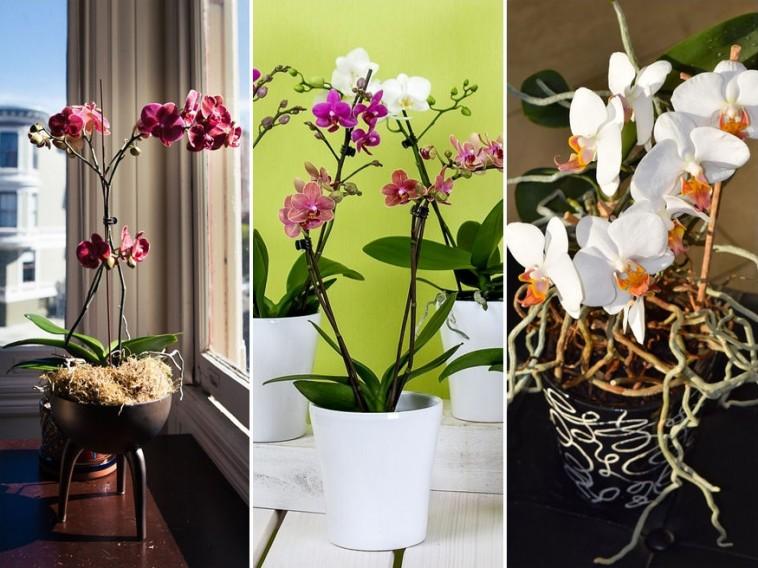 Mikor és hogyan ültessük át az orchideát?