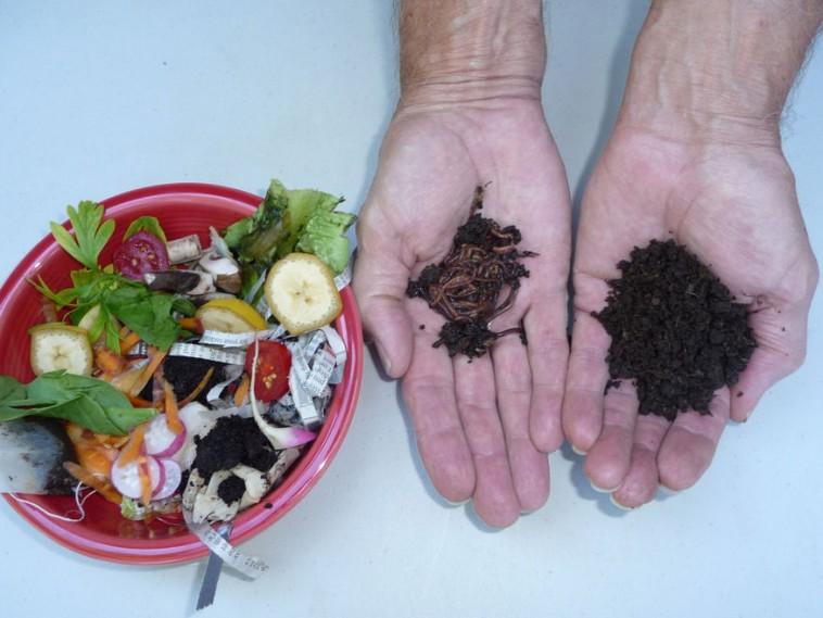 a szuper étel férgek remekül élnek a test teljes méregtelenítése és a vastagbél tisztítása