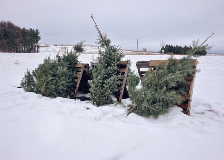 Karácsonyfa, mi lesz veled most?