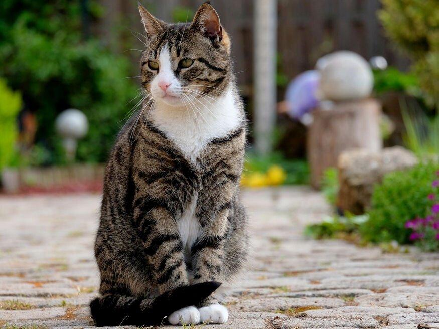 kerti macskák a helmintszennyezés élelmiszer-forrásai