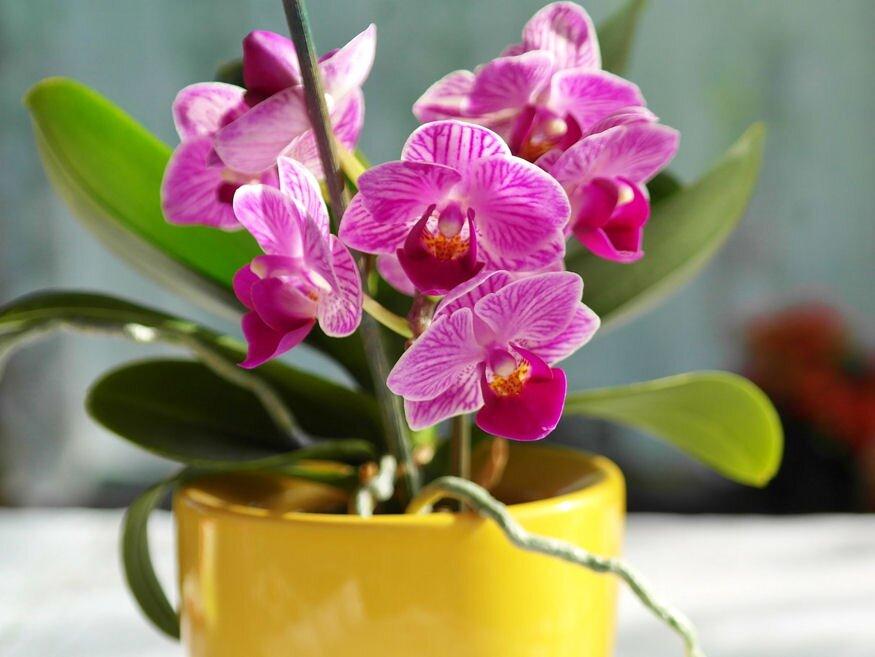orchidea atultetese 01